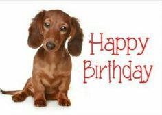 Happy Birthday Dachshund Puppy Dog Card Happy Birthday Dachshund