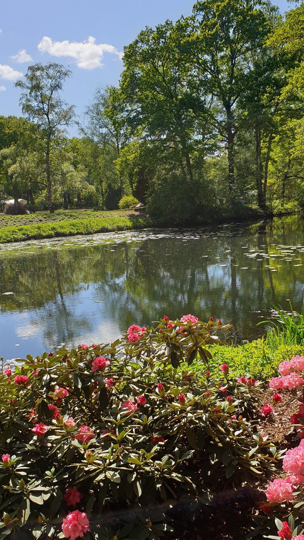 Pictures Of The Day 10 06 20 Rhododendron Park In Bremen Germany An Immersive Guide By Live Life Of Beauty Daily Magazine