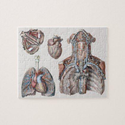 Vintage Human Anatomy Chest, Organs, Eyes Jigsaw Puzzle | Human ...