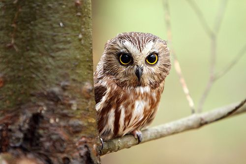 cutest owl ever cute things pinterest owl bird and animal