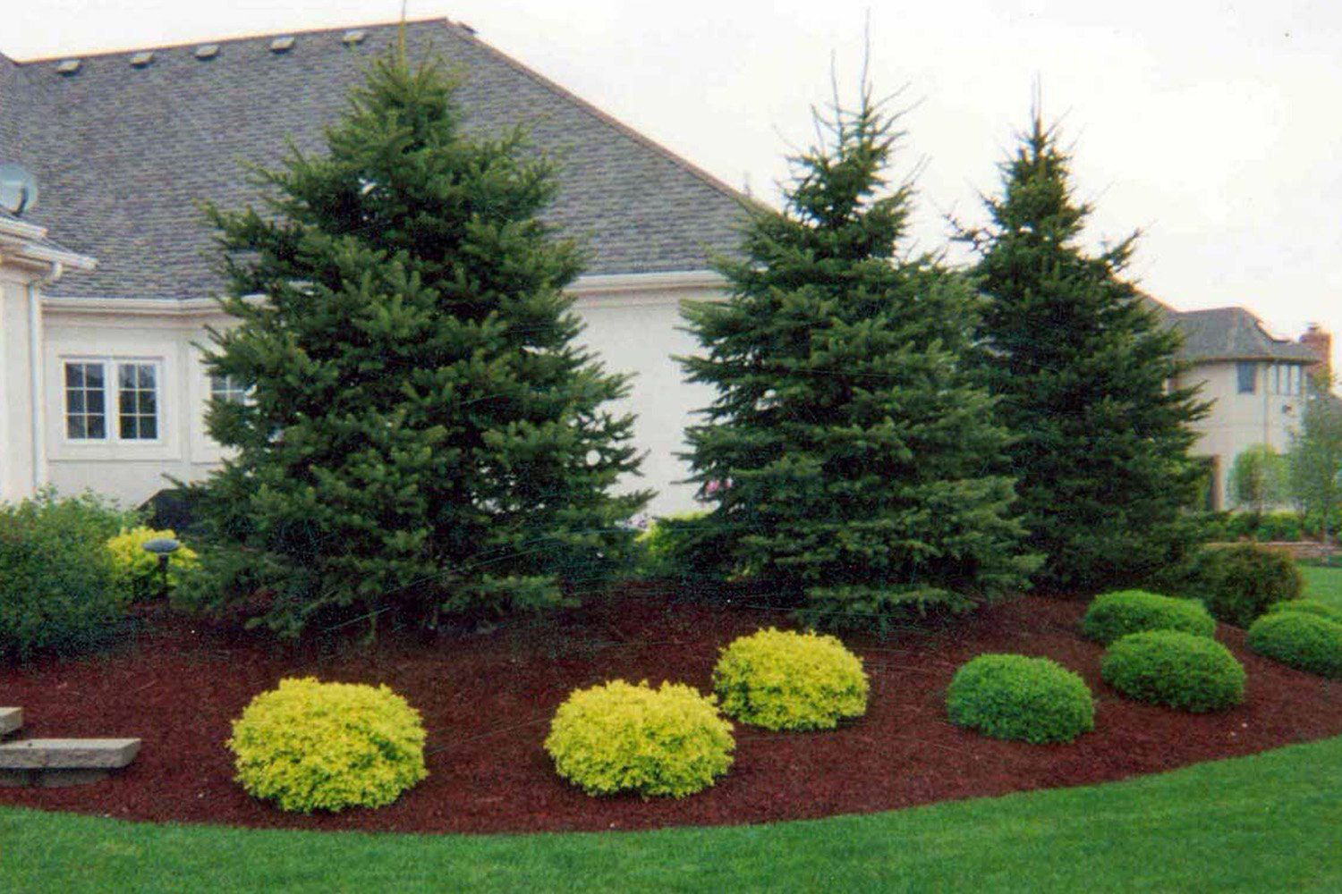 Beautiful landscaping with evergreens small evergreen for Large lot landscaping ideas