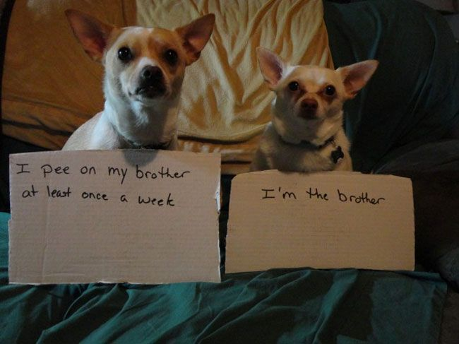 50 Naughty Dogs With Signs Showing Their Infractions Dog Shaming