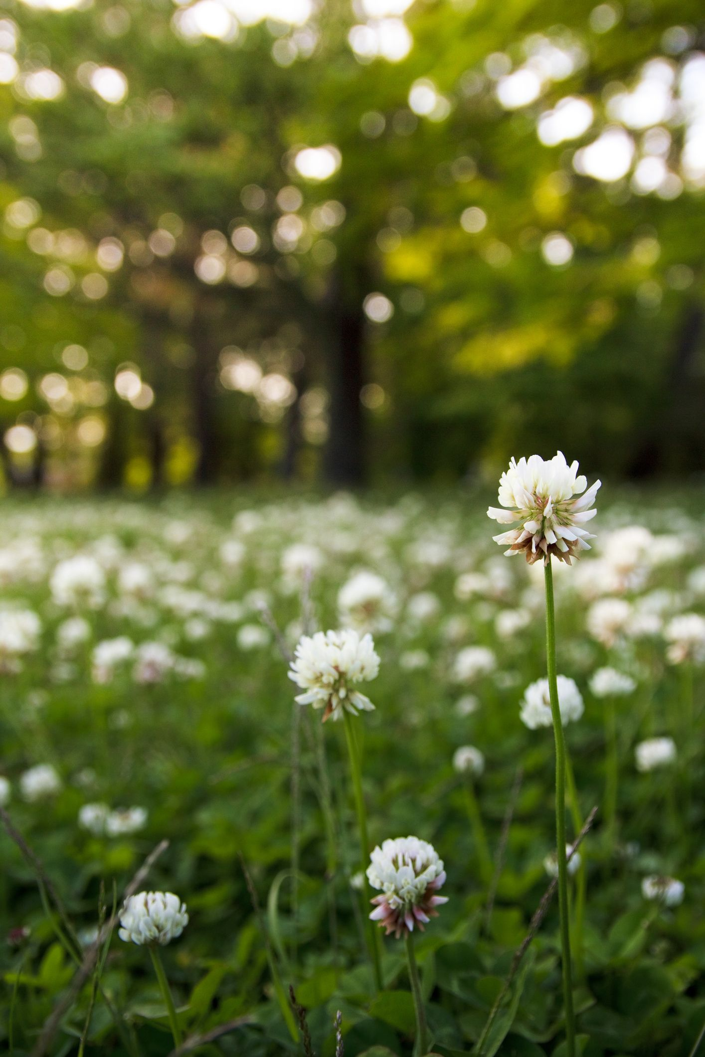 Beautiful nomow alternatives to a grass lawn grass