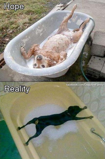 My Dog Hates Baths Getting Wet At All Pretty Much Funny