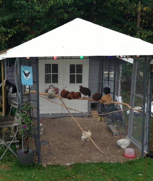 Diy Chicken Coop Plans Youtube Diyportablechickencoopplans Chickencoop Diy Chicken Coop Plans Chicken Diy Chicken Coop Plans