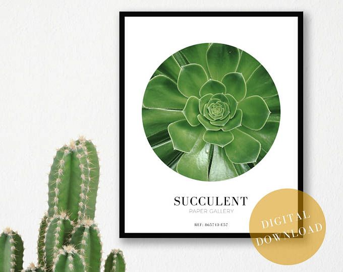 cactus print nature wall art greenery decor leaf print floral