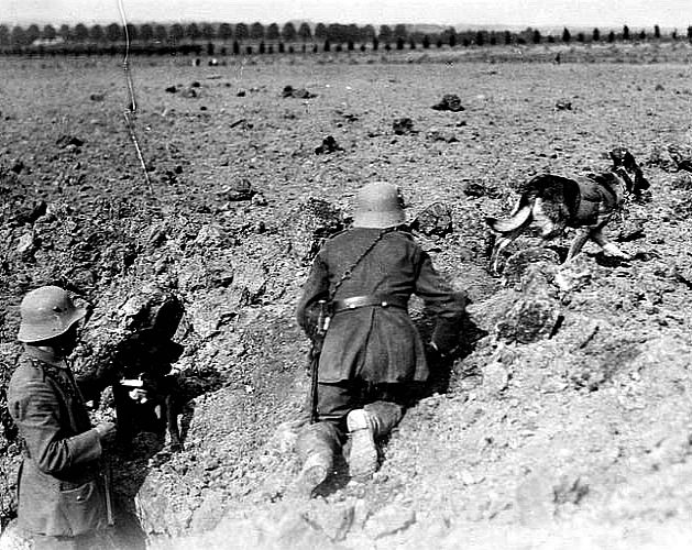 Messenger dog with its handler, in France, during World Wa ... |Wwi Messenger