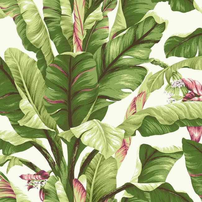 Banana Leaf Wallpaper in Green and Pink design by York