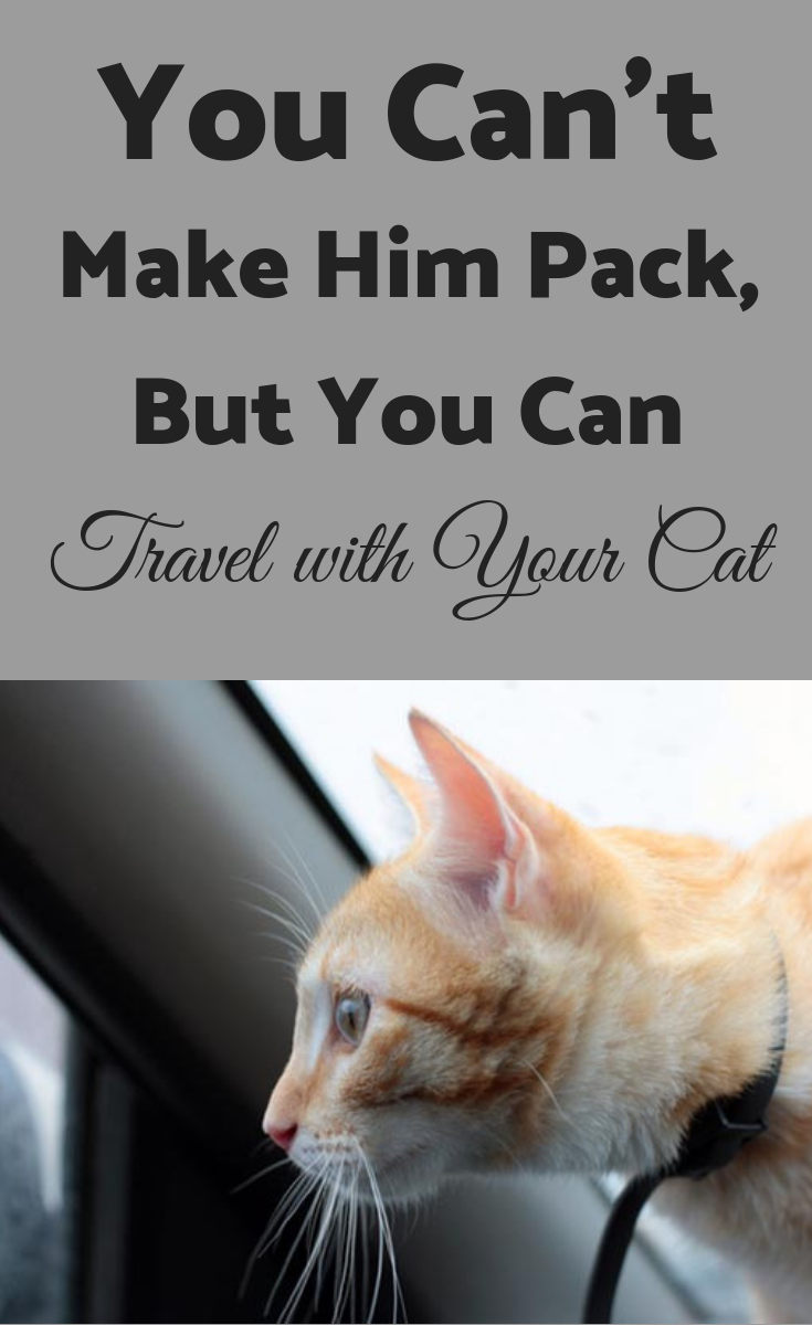 You Can T Make Him Pack But You Can Travel With Your Cat Cat Travel Cats Travel