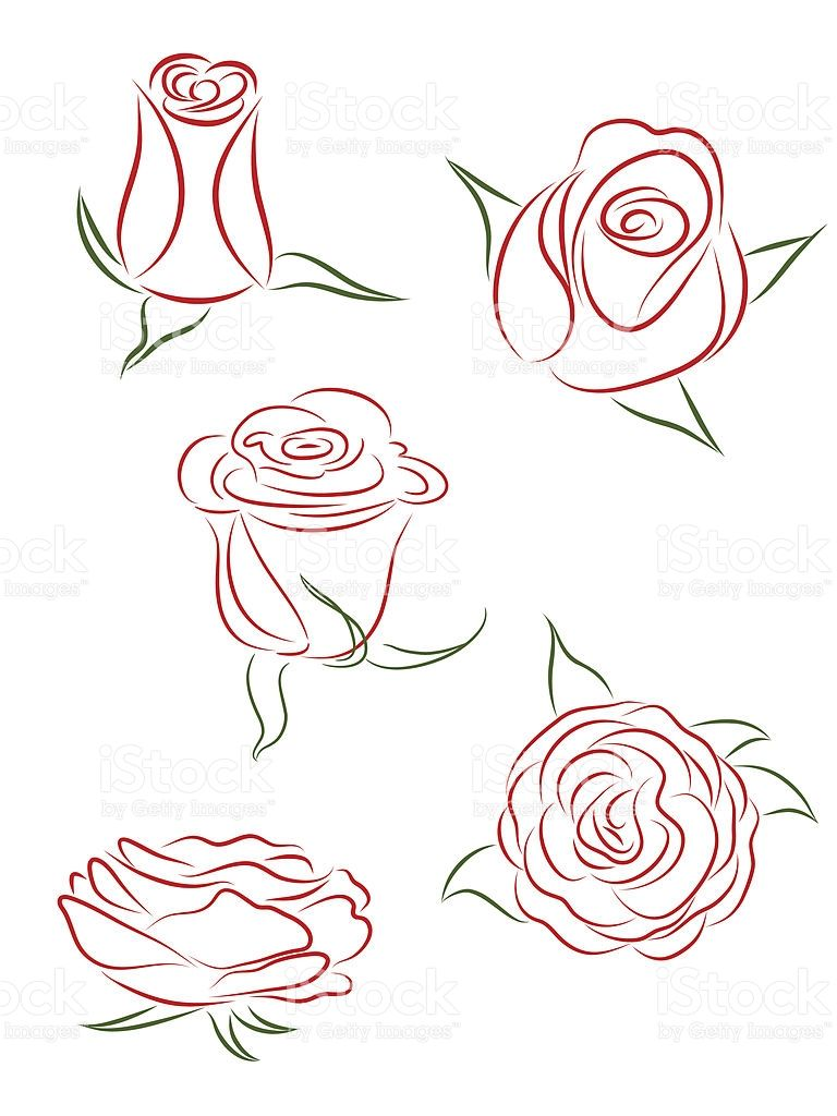 A Set Of Five Buds Of Roses Vector Illustration Desene