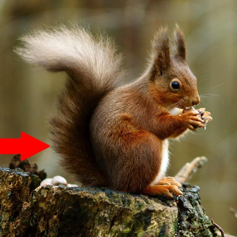 56f8ed9da8ab79e235b7ba0e832774e6 - How To Get Rid Of Squirrels In My Ceiling