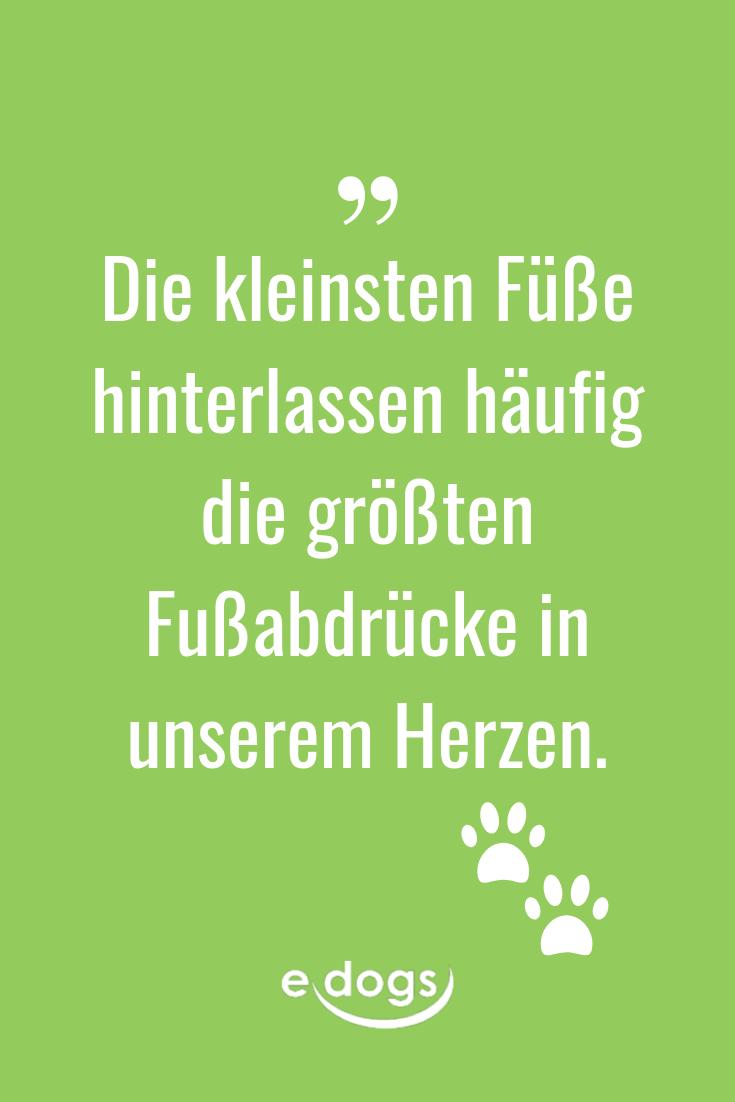 Hundeliebe - Doglove - Zitatbild - Hundesprüche - schöne Sprüche - dog qoutes - dog life - edogs