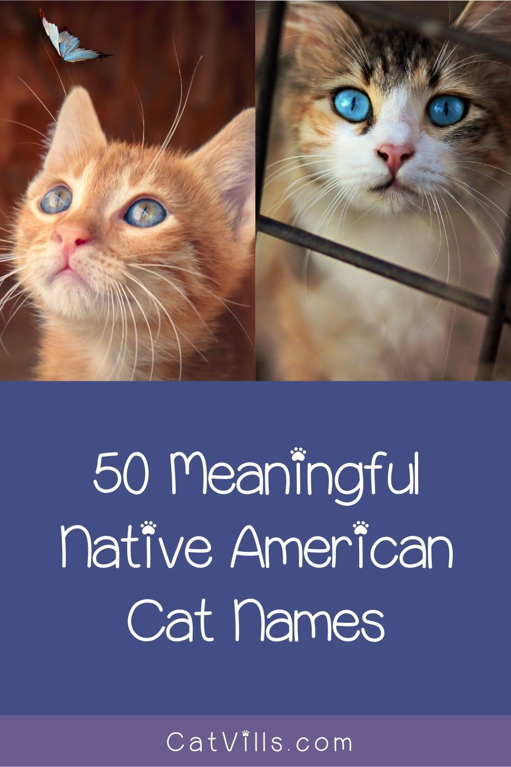Native American Cat Names To Honor
