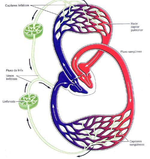 Aula de Anatomia   Sistema Linfático   radiologia   Pinterest ...