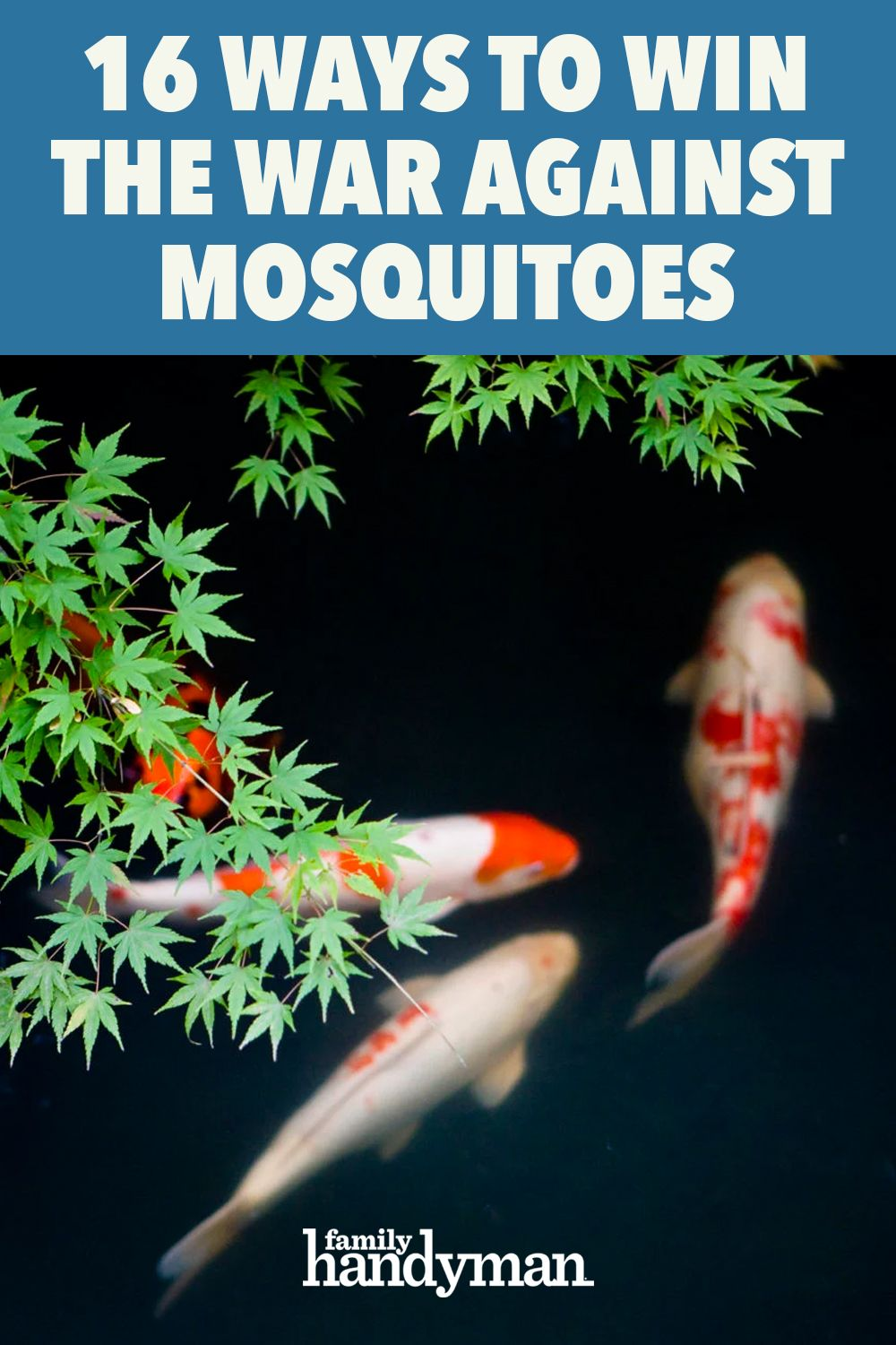 Why Mosquitoes Bite Some People And Not Others Bug Bites