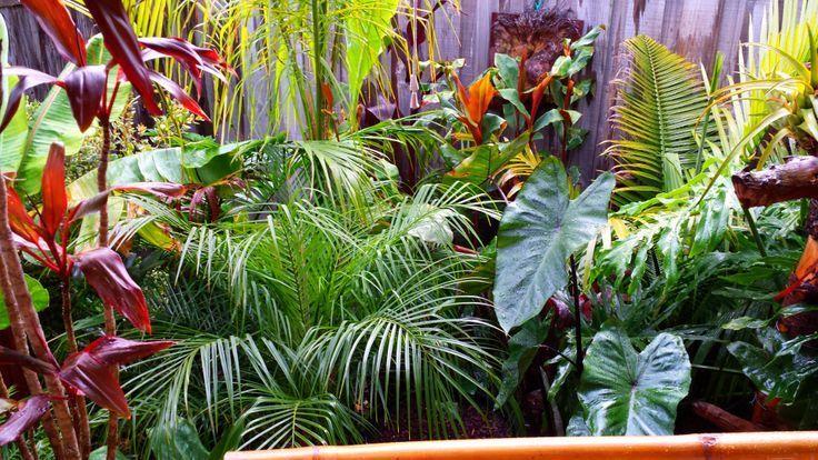 Daniels tropischer Garten in AUSTRALIEN #tropischelandschaftsgestaltung #tropischelandschaftsgestaltung