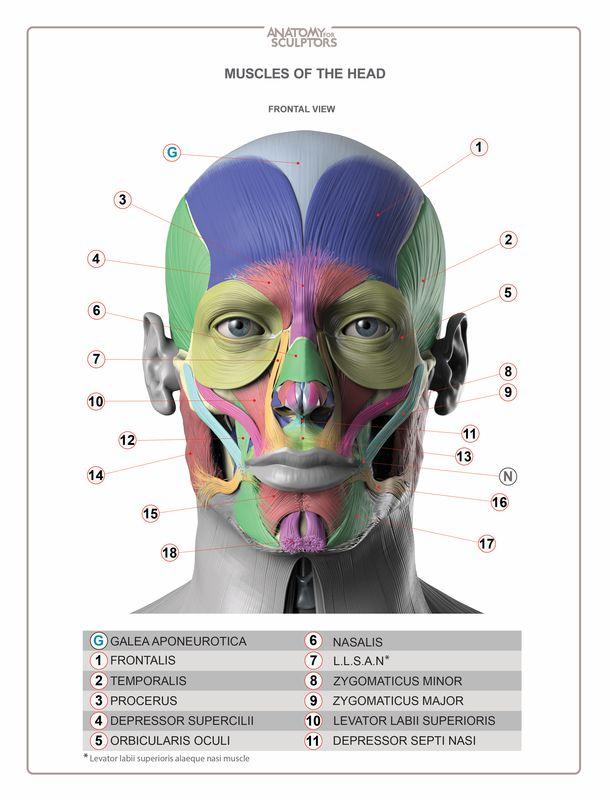 Pin By Kyle Parish On Human Face Anatomy Pinterest Artist Games