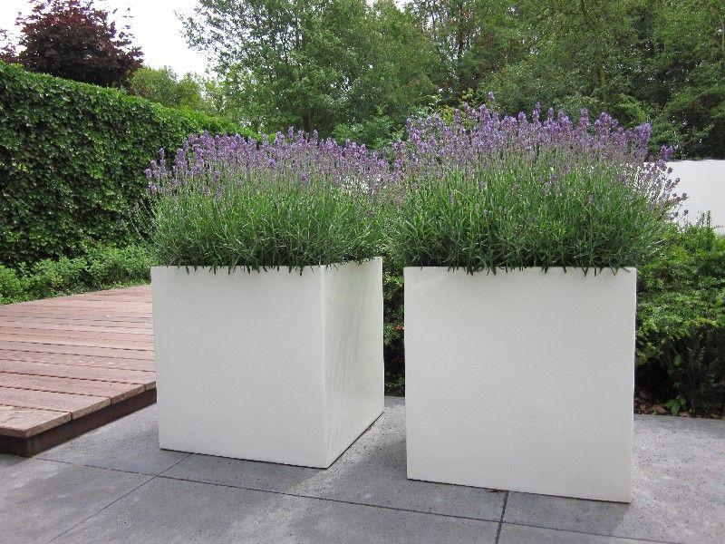 Lavendel Balkon\/Garten Pinterest Lavendel, Gärten und Balkon - gartenaccessoires selber machen