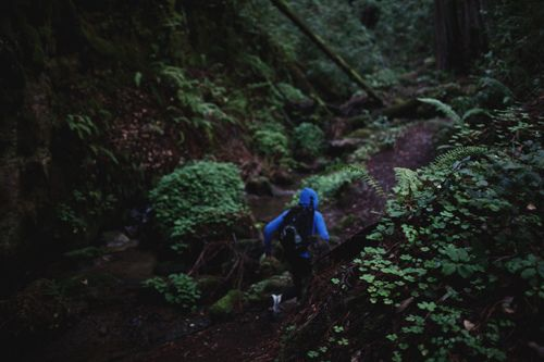 (want to go hiking here some day...Big Basin State Park)