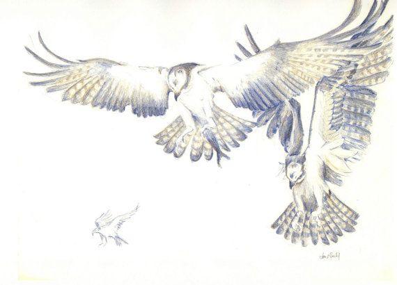 Color original dibujo lpiz Ave aves guila pescadora por