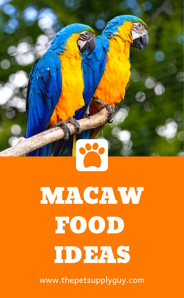 Best Food for Macaws | Pet Birds | Pet birds, Birds, Food lists