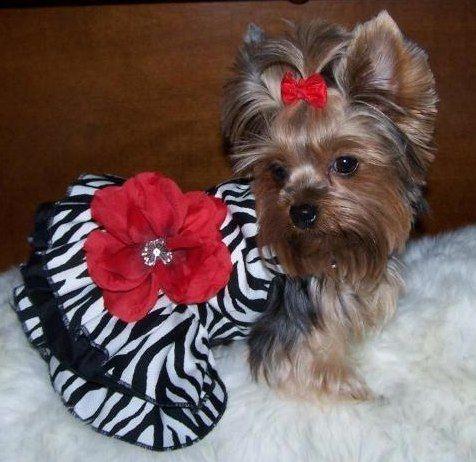Faschionesta Pet Clothes Dog Dresses Girl And Dog