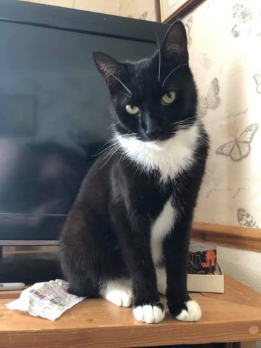 Reunited Black White Tuxie Cat From Bn27 Eastsussex Uk In 2020 Lost Cat Cat Uk Cats