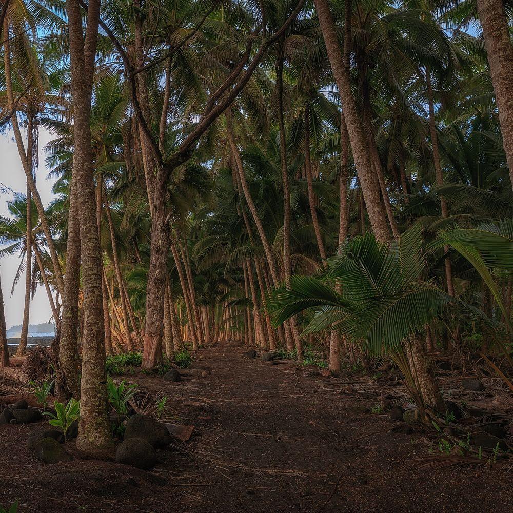The Ali\'i (Kings) Trail, Puna. #tomkualii #LetHawaiiHappen ...