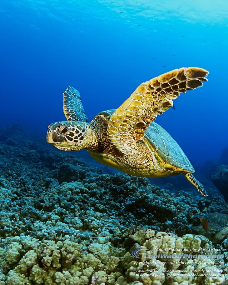 TOP 10 Most Exploited Animals Sea turtle pictures