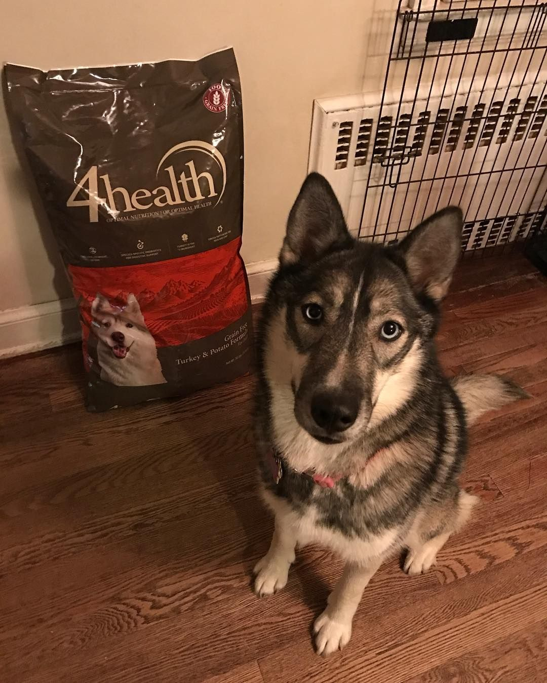 Free Shipping Yes Please Purchase 49 In 4health Dog Kibble Or