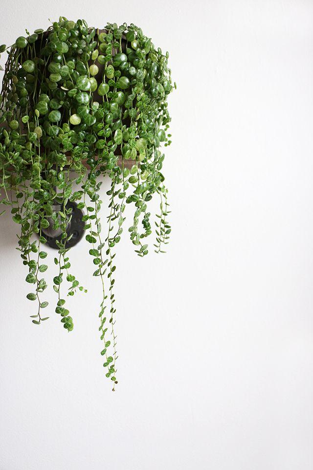 Plant Wall Shelves Indoor Diy