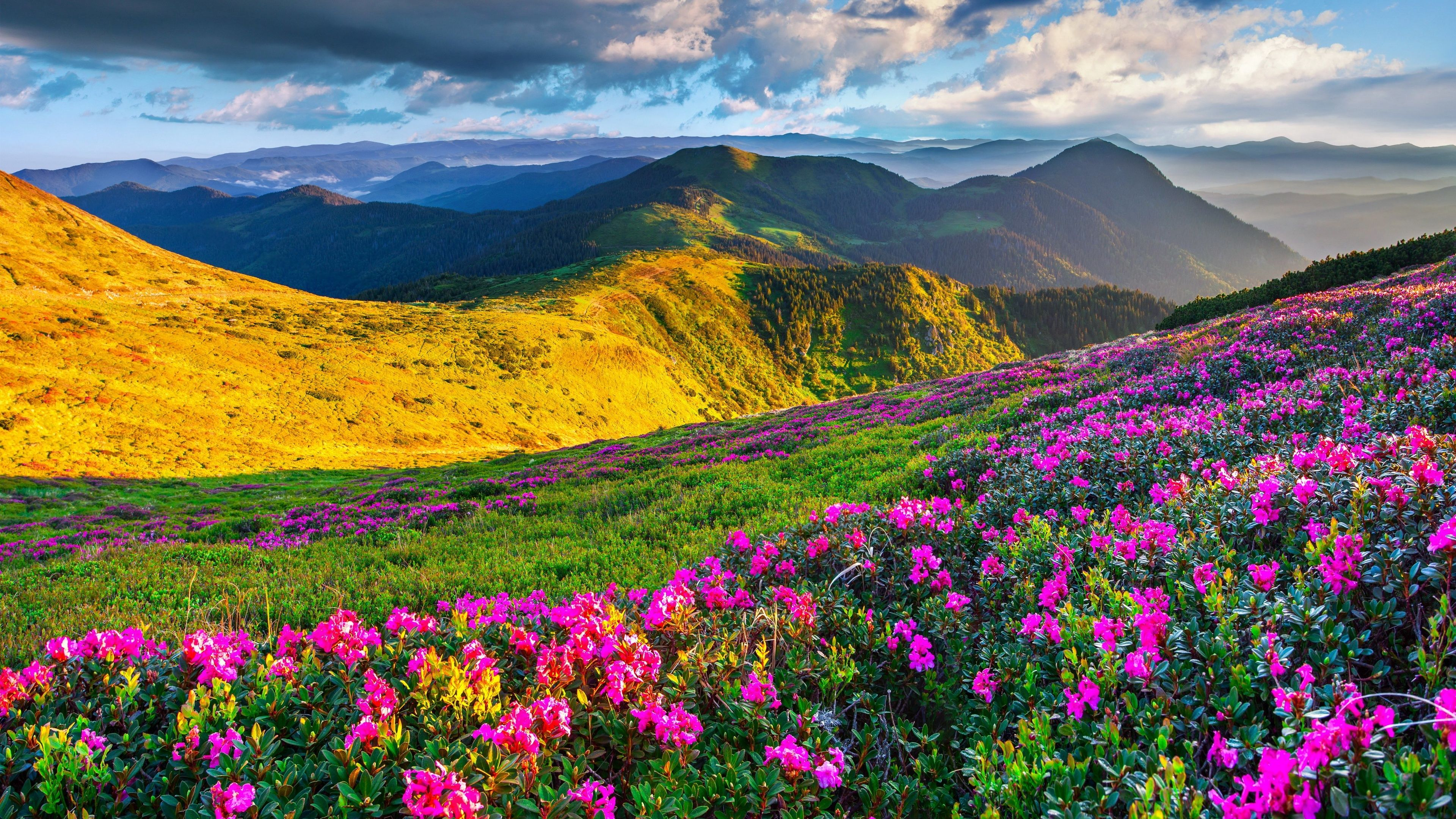 Hd 4k Wallpaper Flowers With Mountain Landscape Healthy Dog