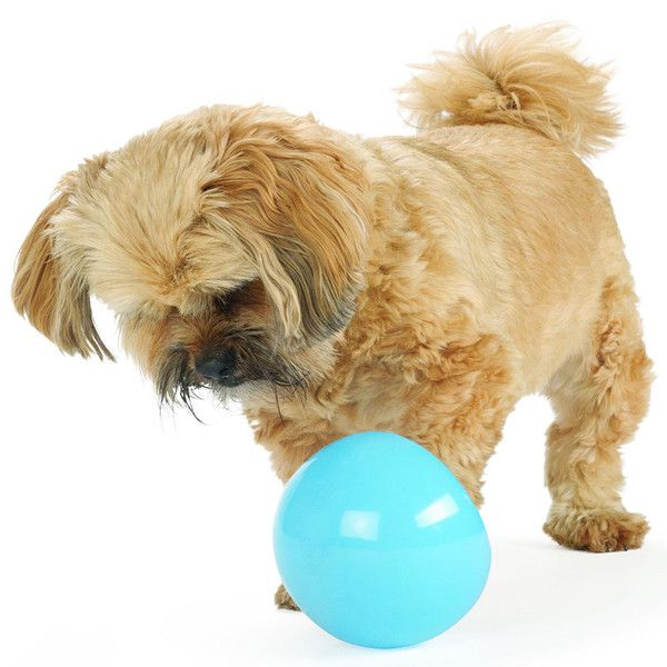 Orbee Tuff Snoop Dog Toy By Planet Dog 25 95 Ukuscadoggie