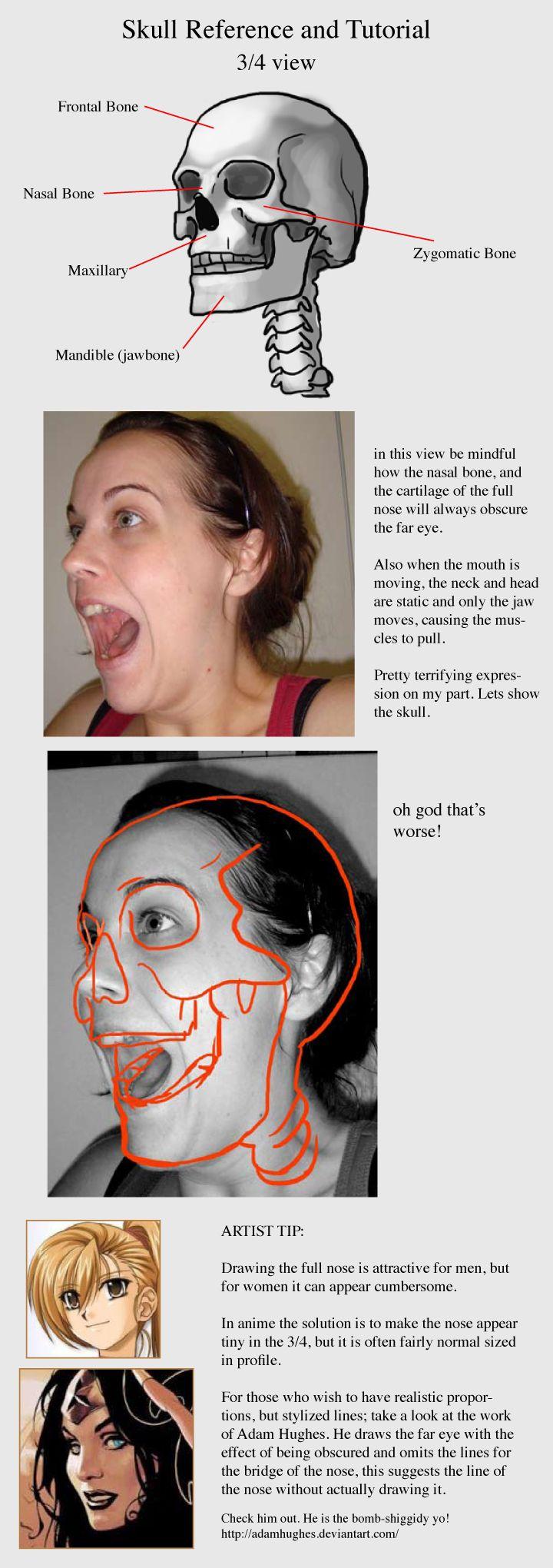 skull_reference_and_tut_3.jpg