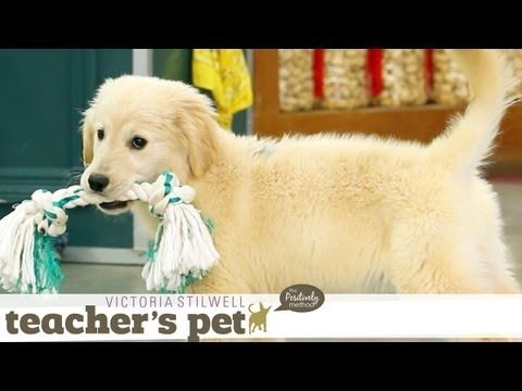Puppy Mouthing Training Basics Teacher S Pet With Victoria