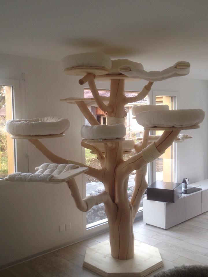 maine coon world naturkratzb ume katze pinterest. Black Bedroom Furniture Sets. Home Design Ideas