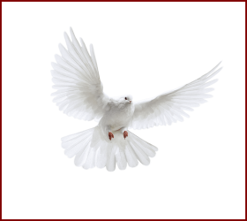 Best Holy Spirit Dove Clip Art Of Flying In Front You Ucan Beyaz Guvercin Png Image With Transparent Background Png Free Png Images Holy Spirit Dove Png Images Clip Art