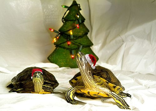 19 Animalitos Miniatura Dsifrutando De La Navidad 0