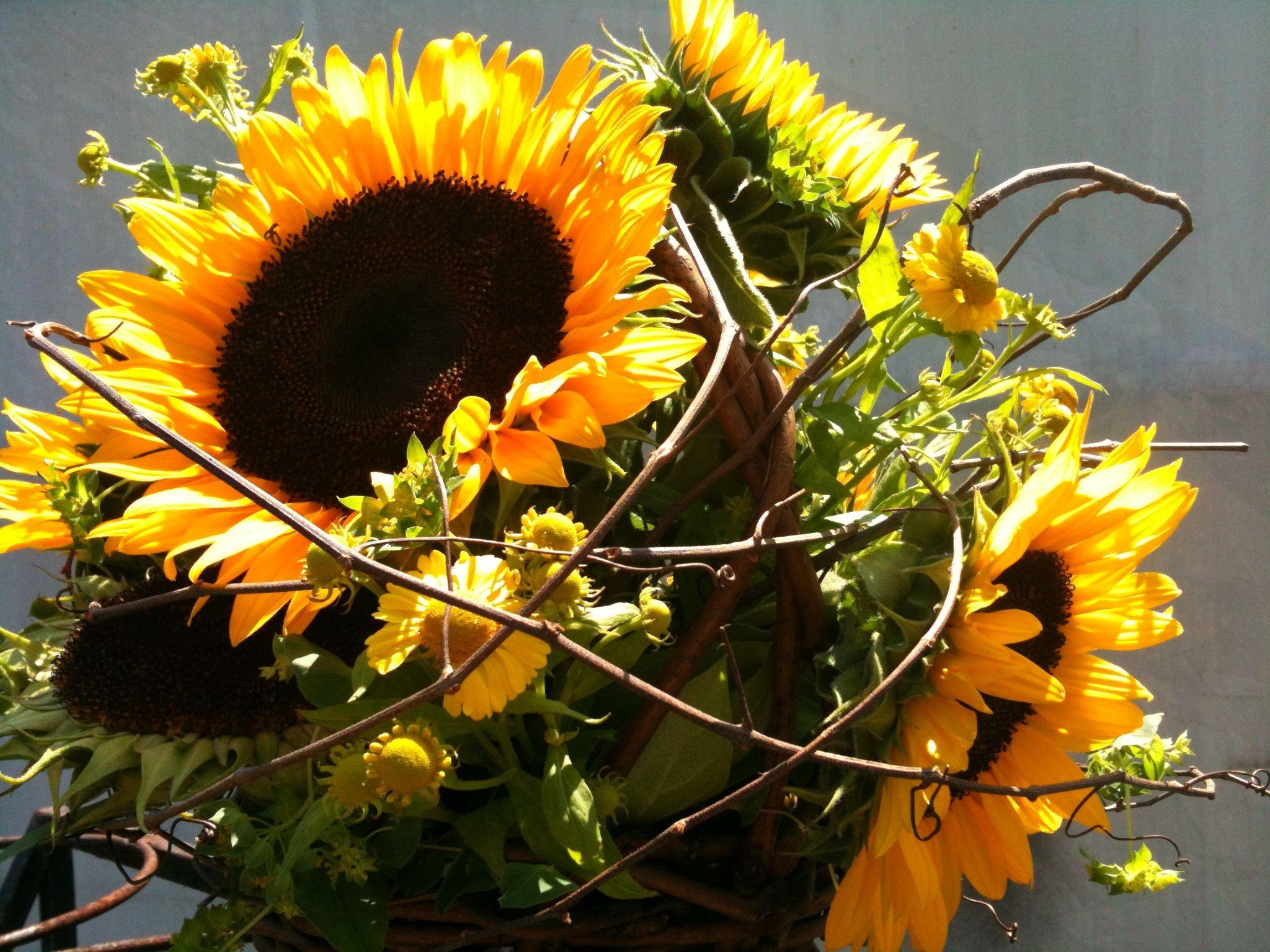 The Sunflower Is The State Flower Of Kansas And The National Flower Of Ukraine Flowers Sunflower Flower Arrangements