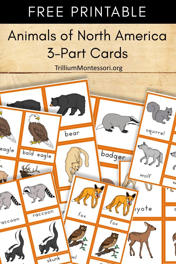 Free Printable Animals of North America Geography for