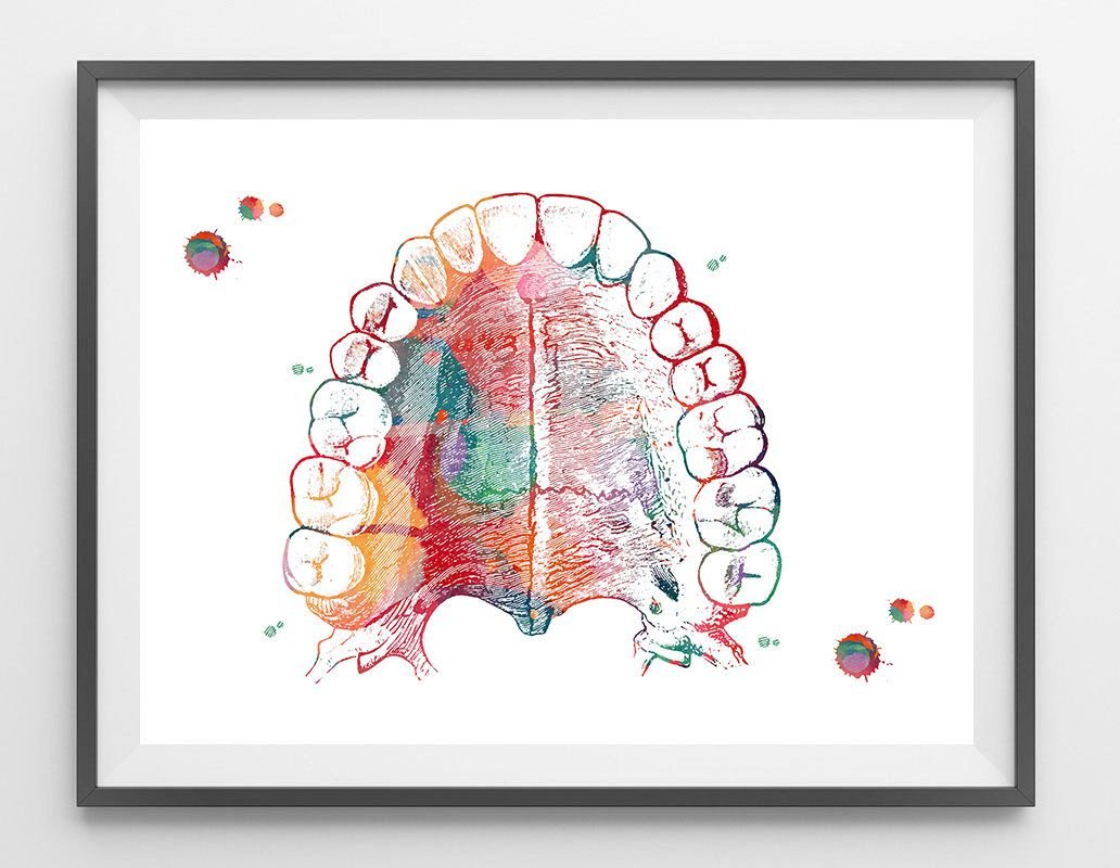 Mouth Anatomy Hard Palate and Teeth Art Print Medical Art Watercolor ...
