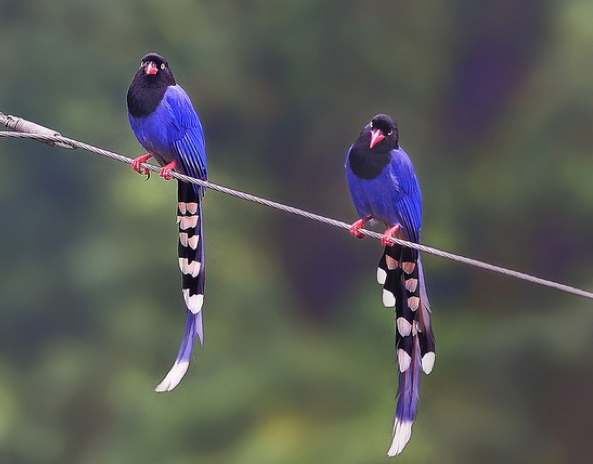 Birds on a wire ....the movie