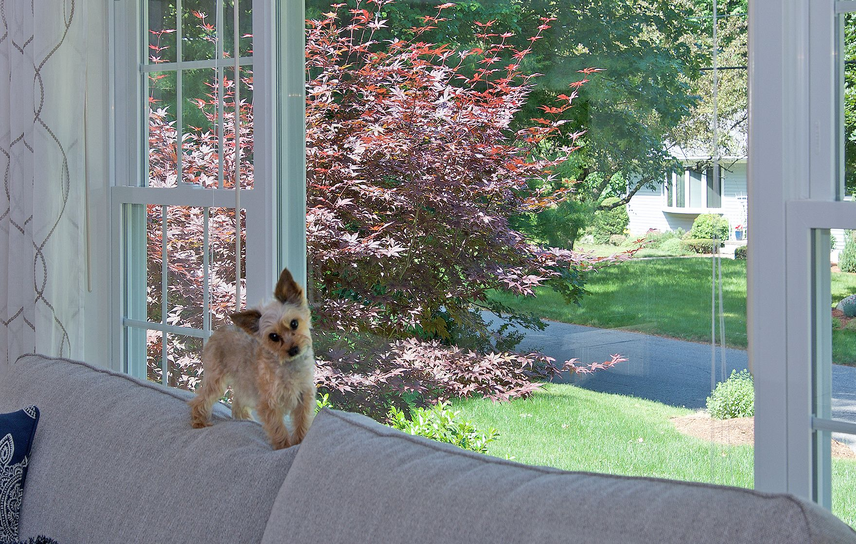 Little Lola loves the view from the new Harvey BP Windows in her