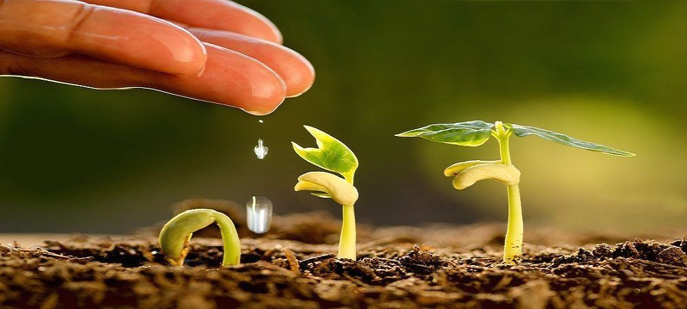 Pin on horticulture careers