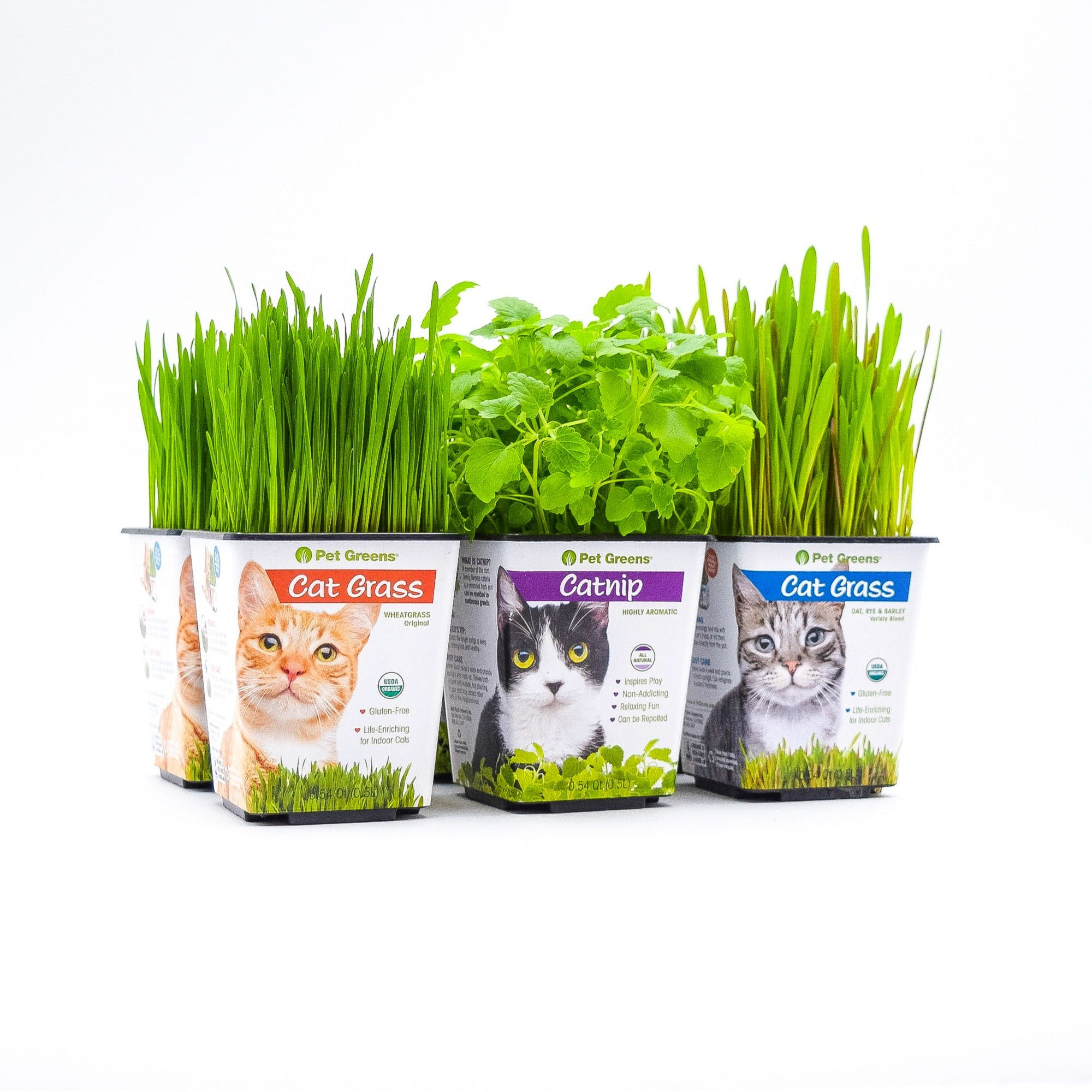 Pet Greens Multi Pack Live Cat Grass And Catnip Pack Of 6 Petco In 2020 Cat Grass Pet Grass Cat Grass Indoor