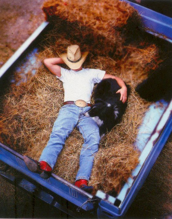 A nap in the truck bed  the modern cowboy... in the old days was in the back of a buckboard