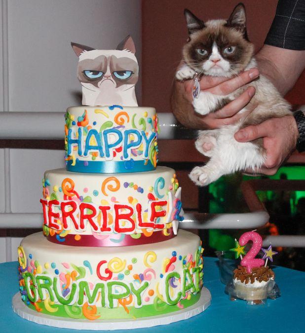 Happy 2nd birthday Grumpy Cat Grumpy cat Birthdays and Internet