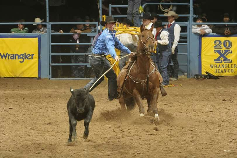 Quot Quot Rambo Quot Quot One Of The Better Tie Down Calf Roping Horses Out There Rodeo S