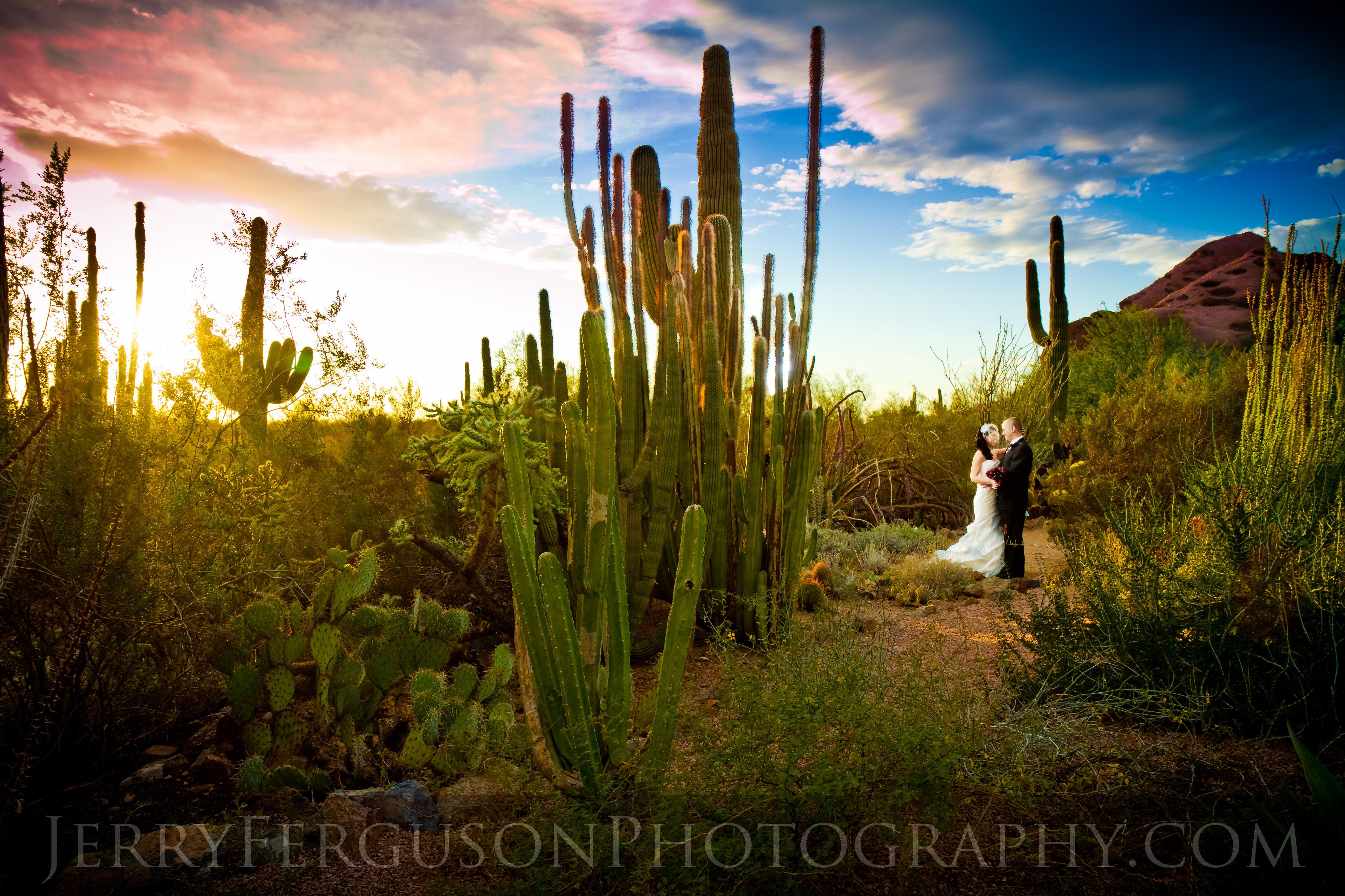 desert botanical garden engagement session at sunset in phoenix