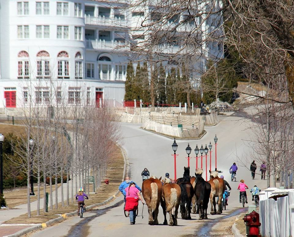 The horses arriving for the season on Mackinac.